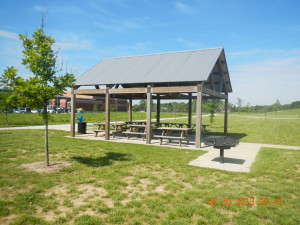 A covered picnic area with a newly planted tree outside